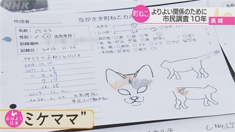 九州「貓咪城市」長崎  熱心人士組野貓調查隊