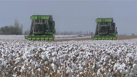 中國啟動「未來棉花」計畫 試圖制定中國標準
