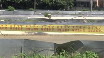 台灣蝦染疫!中國「十足目虹彩病毒」致死率達八成