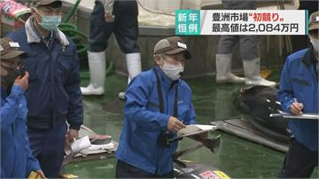 東京豐洲市場新春第一鮪競標買氣差!僅拍出570萬台幣