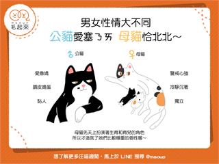 【貓貓小學堂】男女性情大不同——公貓愛塞奶,母貓恰北北?