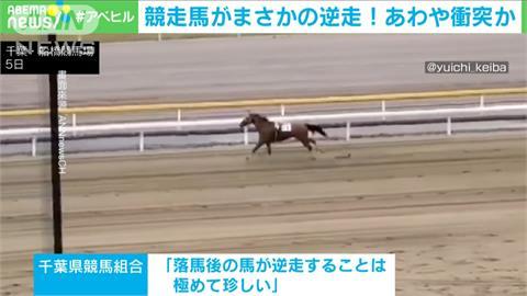 賽馬場罕見意外!馬匹受驚嚇 賽場中逆向奔跑差點相撞
