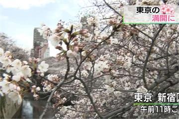 東京櫻花正式盛開 比去年提早九天