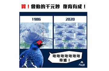 快新聞/累積了30年的歲月 內政部捎來好消息:台灣特有種帝雉終於復育成功