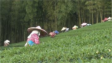 在台灣領中幣!鹿谷鄉農會遭爆加班費給人民幣