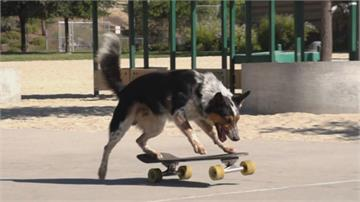美國狗狗Jumpy秀絕技 創100公尺滑板世界紀錄