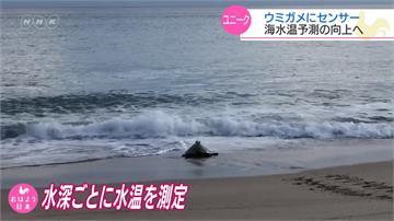 海龜背感測器 提升海水溫度長期預測精確度