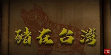 台灣演義/12生肖壓軸、扣連庶民文化 豬在台灣的歷史|2020.09