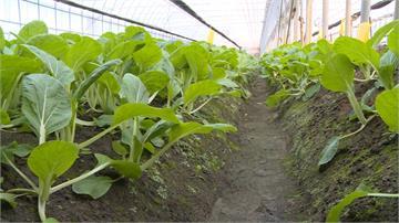 延後開學蔬菜滯銷...有機菜農推「蔬菜箱」自救