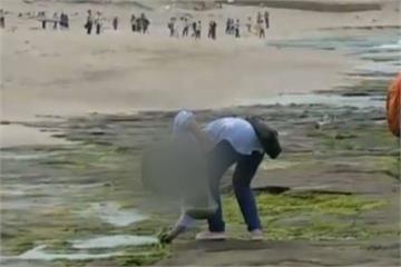 扯! 踩踏老梅綠石槽 還拿塑膠袋摘海菜