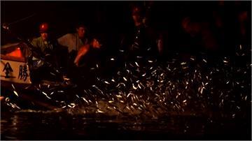 近年漁獲量銳減 金山「蹦火仔」爆失傳危機
