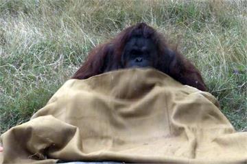 入冬最強寒流報到!壽山動物園防寒大作戰