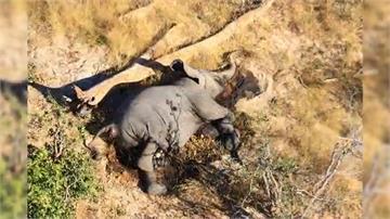 波札納360隻大象暴斃 死因離奇恐致公衛危機