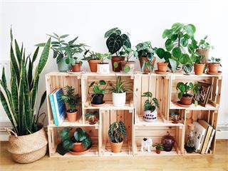 一盆室內植物就搞定!輕鬆打造北歐、韓風小房間