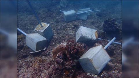 潛水業者投放水泥樁欲復育軟絲 好心變調! 水泥樁反壓毀珊瑚