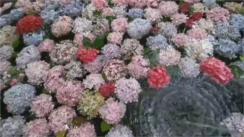 殘花打造「水上繡球花」  武陵農場唯美浪漫媲美日本「花手水」