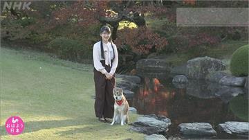 日本愛子公主19歲生日 皇居溜狗畫面公開