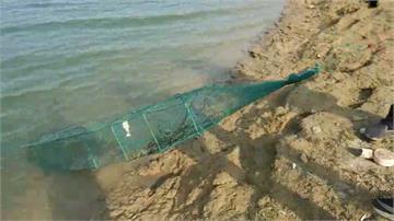 嘉義蘭潭水庫驚見外來種入侵!首次發現澳洲淡水龍蝦