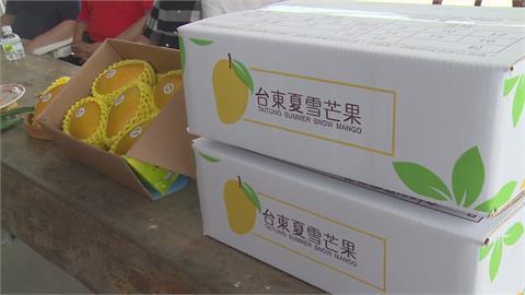 芒果界LV!夏雪芒果變「春雪」產量大增3到4成 3月開採搶「鮮」外銷