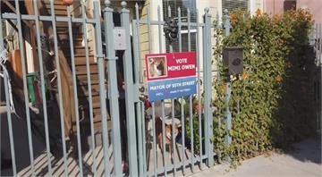加州奧克蘭社區選街長 貓貓狗狗大比拚