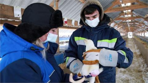 俄註冊全球首款動物武肺疫苗 最快4月生產
