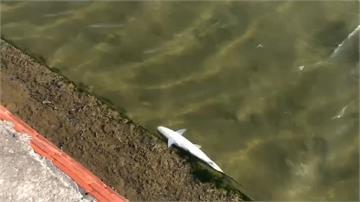 超過5萬尾虱目魚被凍死 養殖漁民損失慘憂下波寒流