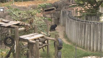 沒錢讓動物們吃好吃健康?議員踢爆壽山動物園飼料預算過低