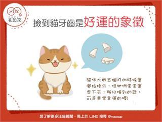 【幸運貓齒】你有撿過貓牙齒嗎?這可是好運的象徵喔!|寵物愛很大