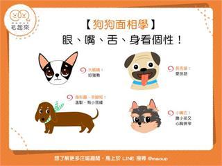 【狗狗面相學】狗狗也能看面相?眼、嘴、舌、身看個性!|寵物愛很大