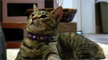 疑遭飼主母傳染 法國首隻染病家貓已康復