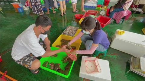 漁獲減少9成 東石魚市場拍賣冷清