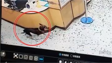 台南東山周六連三震!最大規模5.2震撼南台灣