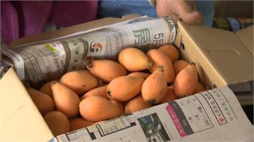 防疫在先!太平枇杷季取消四場產銷活動