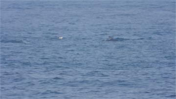 驚喜!和平島近岸海域200隻長吻真海豚現蹤