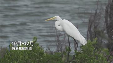 推廣賞鳥生態旅遊 雲嘉南賞鳥系列活動開跑