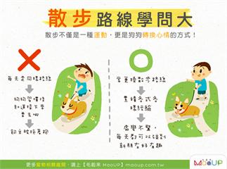 【散步路線學問大】散步不只是運動,更能讓狗狗轉換心情!
