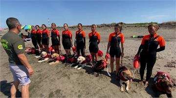 義大利狗狗救生員 疫情期間成海灘救命要角