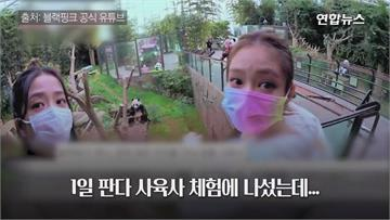 南韓女團全妝抱貓熊 中國網友暴氣出征