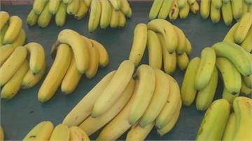 香蕉大豐收產地價1斤不到10元 陳明文盼政府加強收購力道