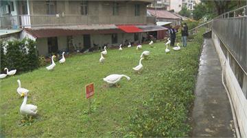公園「鵝」藝品遭斷頭腳 凶手落網:只因好玩