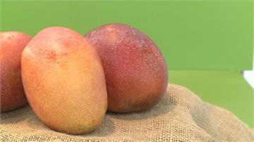 「芒果的100種可能」發表會 農委會展示芒果新科技