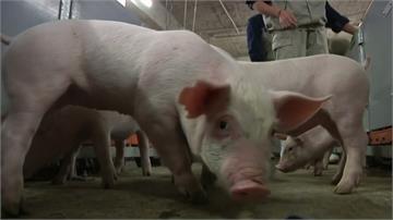 疫情連環燒!中國研究指出 新型G4豬流感為H1N1病毒變種