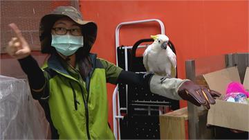 就像小男孩貪玩又聰明?北市動物園鸚鵡「雅虎」愛捉弄女性