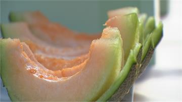 皮薄肉厚帶焦糖.香草味 哈密瓜界愛馬仕 嘉義新品種「極光哈密瓜」