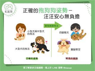 【抱狗姿勢學問大】你抱狗狗的姿勢正確嗎?快來看看吧!|寵物愛很大