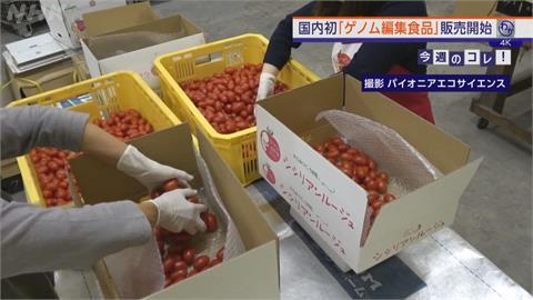 日本又有健康聖品? 首款基改番茄有效降血壓