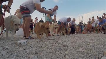 「吃」也是比賽項目 狗狗馬拉松萌度破表