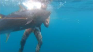 濫補致數量驟減 黑鮪魚復育成功再現蹤跡