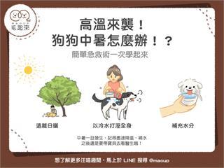 【毛孩保健術】高溫來襲!狗狗中暑怎麼辦!?|寵物愛很大
