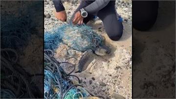 千鈞一髮!民眾發現瀕危欖蠵龜纏滿漁網 將送回台灣本島照料